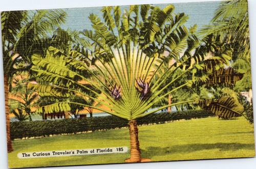 St. Petersburg Florida