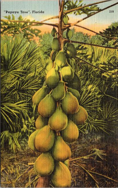 Florida Papaya tree