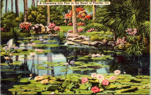 Florida Lily pool
