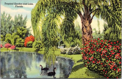 Tropical Garden and Lake, Florida (25-15-345)