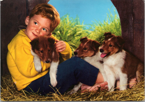 Boy with dogs (26-15-527)