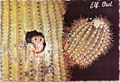 owl cactus