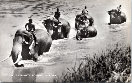 People riding elephants in river
