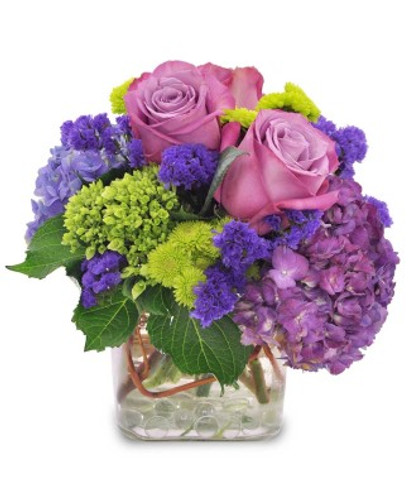 Purple roses & hydrangeas in a cube vase with chartreuse mini hydrangeas.