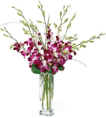 Dendrobium Orchids in a clear cylinder vase