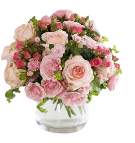 Soft pink rose blooms in several varieties with rose berries