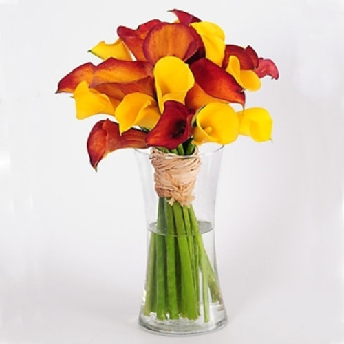 CALLA LILY BRILLIANCE