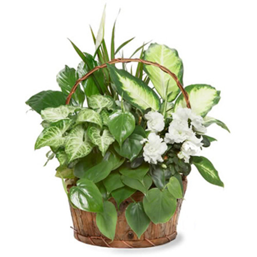 ASSORTED PLANTER BASKET