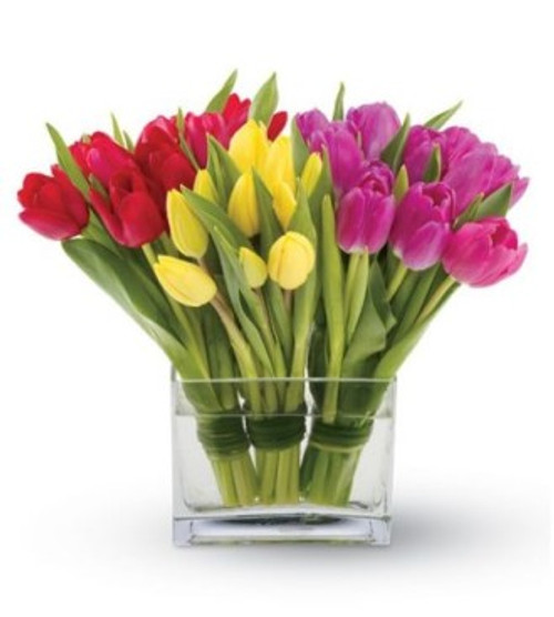 TULIP BUNCHES