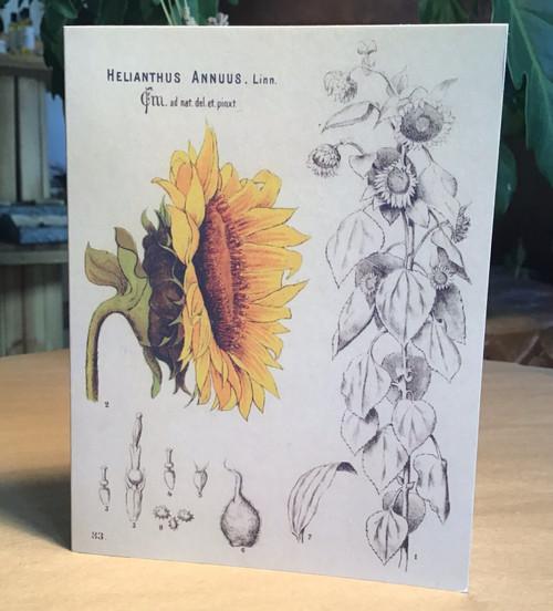 Sunflower Magic Card