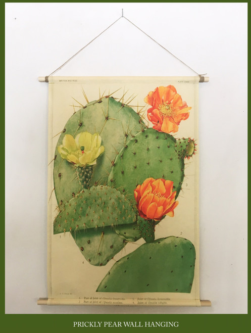 Wall Hanging - Cactus Magic