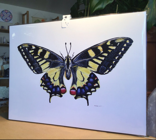 Butterfly 9x12 Print