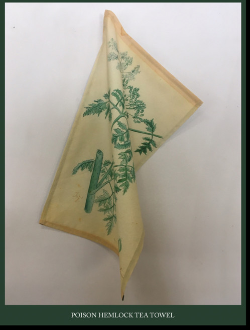 Tea Towel - Poison Hemlock