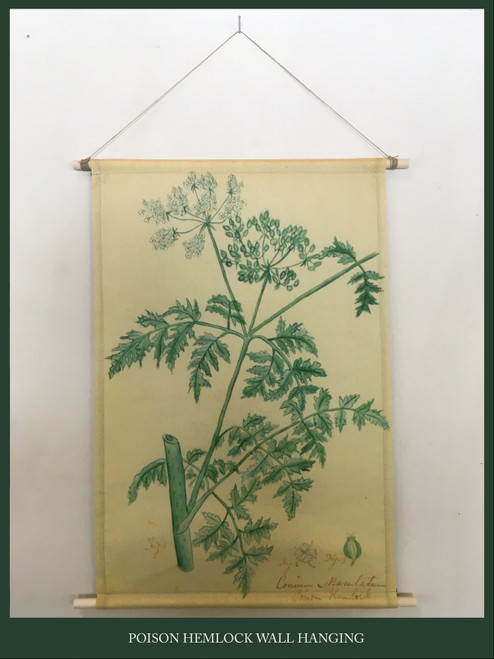 Wall Hanging - Poison Hemlock