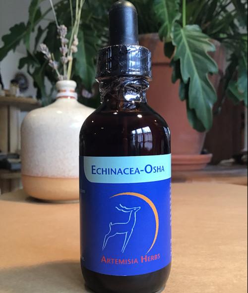 Echinacea Osha