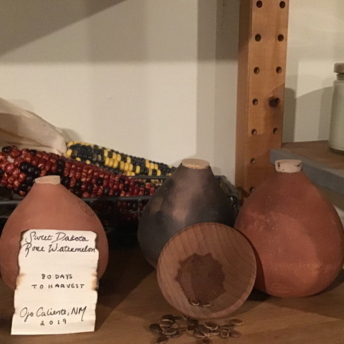 Sweet Dakota Watermelon Seed Pot