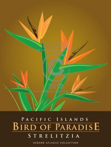 Bird of Paradise (Strelitzia) Illustration - Pacific Islands