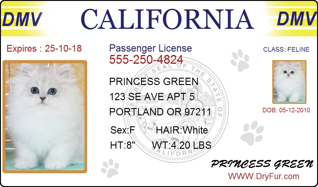 pet-drivers-license.png