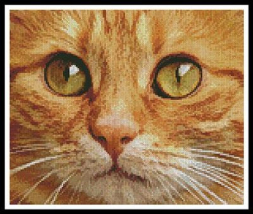Ginger Cat Close Up Counted Cross Stitch Pattern