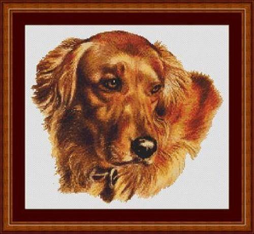 Golden Retriever-Amber Counted Cross Stitch Pattern