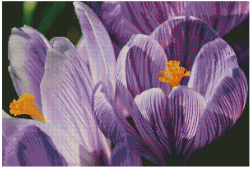 Crocuses Counted Cross Stitch Pattern - PDF Download - Fox Trails Needlework