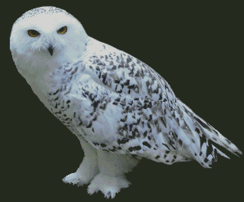 Snowy Owl-PDF Download