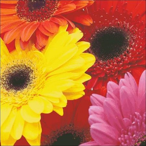Gerber Daisies Counted Cross Stitch Pattern