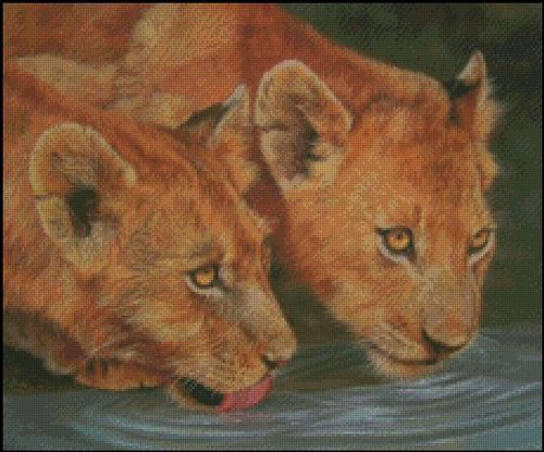 2 Lion Cubs Drinking Counted Cross Stitch Pattern