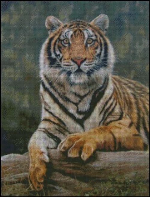 Bengal Tiger Counted Cross Stitch Pattern