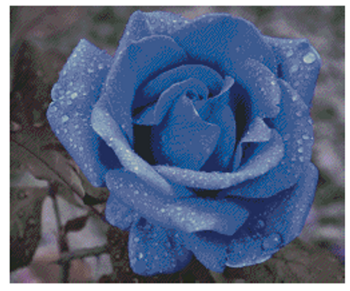 The Blue Rose Counted Cross Stitch Pattern - PDF Download
