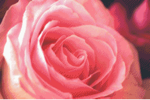 The Pink Rose Counted Cross Stitch Pattern - PDF Download