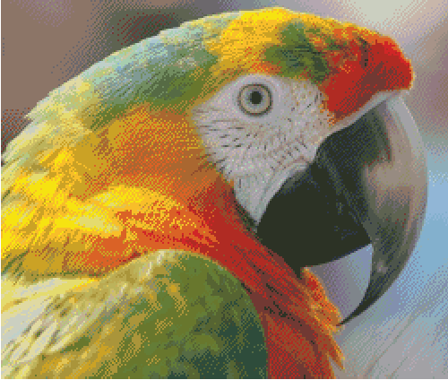 Macaw Counted Cross Stitch Pattern