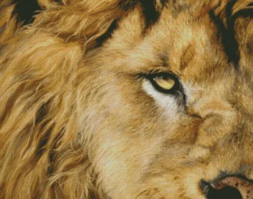 Eye of the Lion - Shinysun's Counted Cross Stitch Pattern