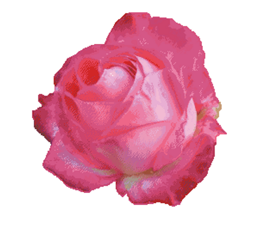 Blooming Rose Counted Cross Stitch Pattern