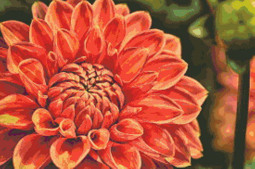 Dahlia in Orange and Coral Counted Cross Stitch Pattern