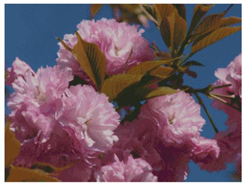 Kwanzan Cherry Blossoms Counted Cross Stitch Pattern