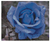 The Blue Rose Counted Cross Stitch Pattern