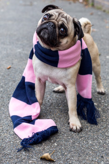 Kids Pink and Navy Bar Scarf