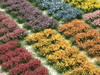Realistic Self-Adhesive Flowering Tufts - Flower Sampler