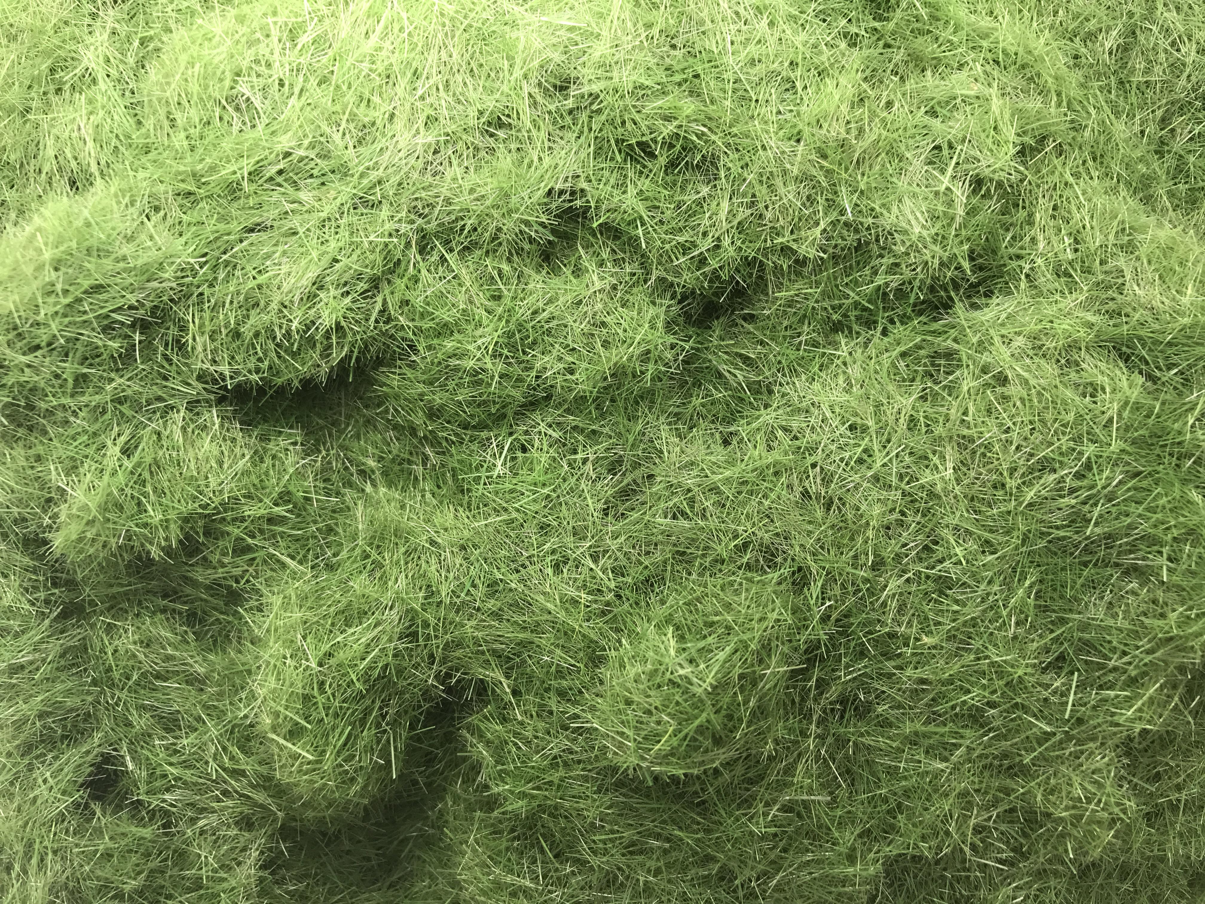 deep-green.jpg