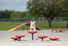 Dog Balance Pods