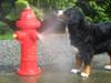 Spray Hydrant