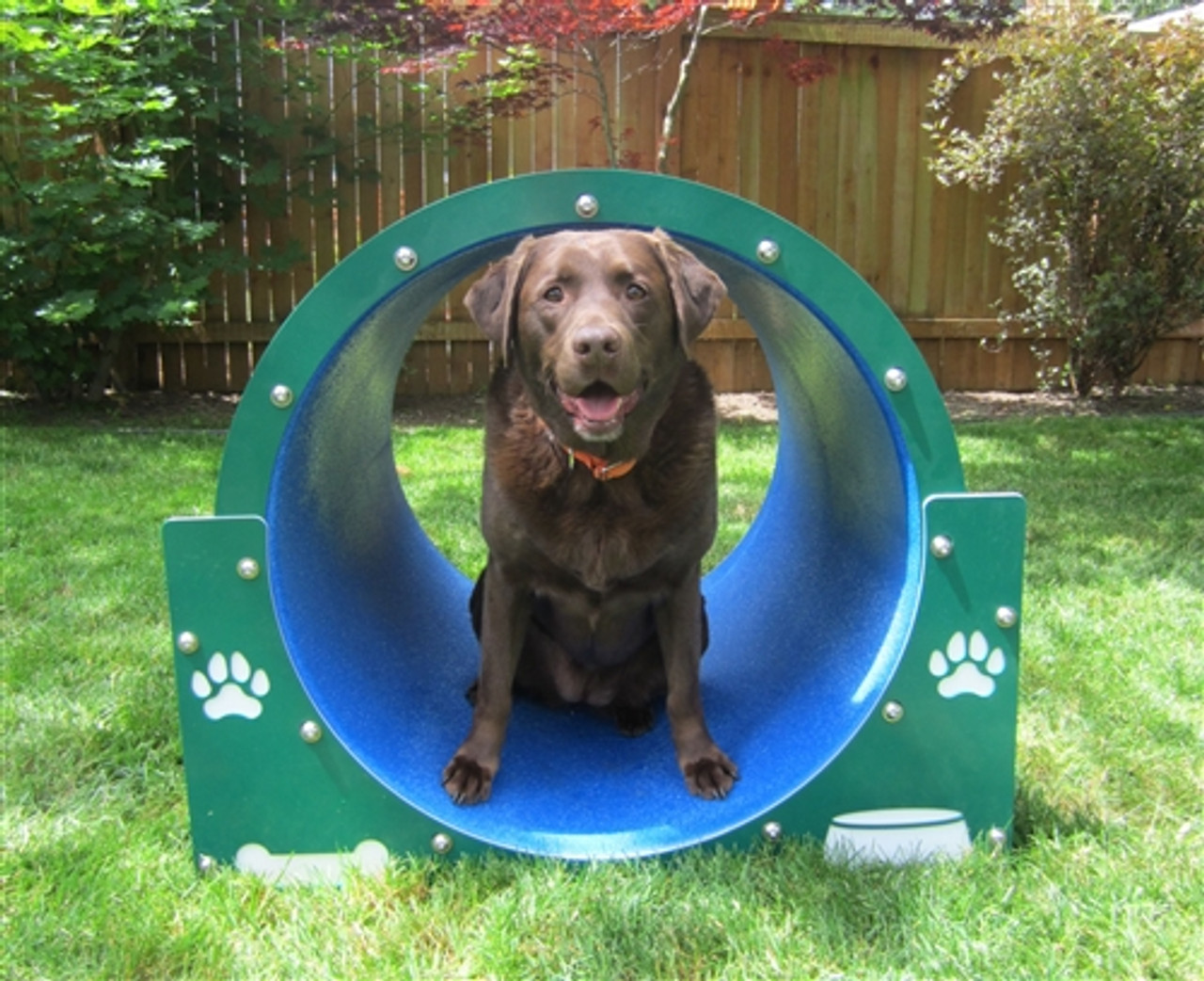 brown lab sitting in a bow wow barrel