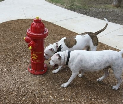 Dog Park Fire Hydrant