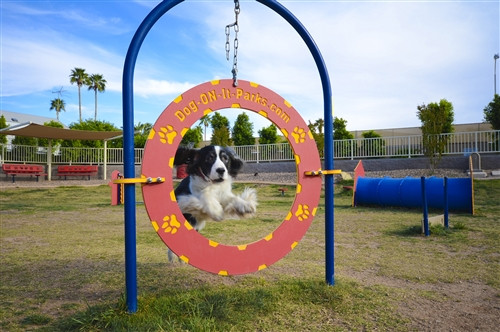 Adjustable Dog Tire Jump