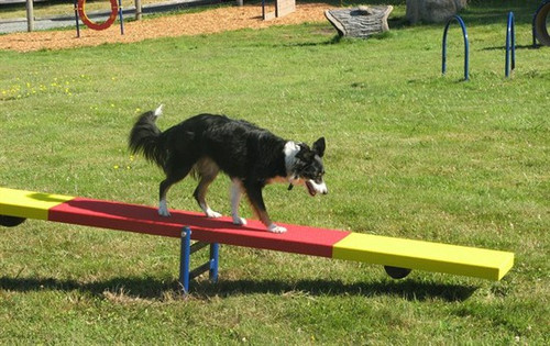 Dog Teeter Totter