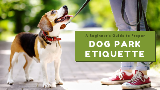 A Beginner's Guide to Proper Dog Park Etiquette