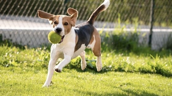 The Advantages of Adding a Dog Park To Your Community