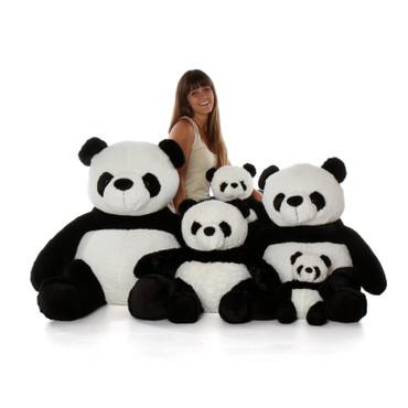 panda Bears Family