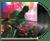 A Different Compilation (2lp) - Buzzcocks (LP)